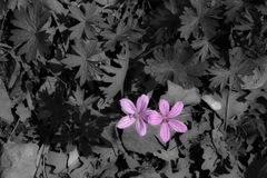 Εκλεκτικό χρώμα, ιώδη wildflowers στοκ εικόνα με δικαίωμα ελεύθερης χρήσης
