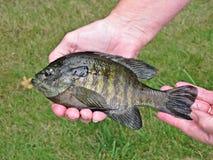 εκμετάλλευση ψαριών Στοκ φωτογραφίες με δικαίωμα ελεύθερης χρήσης