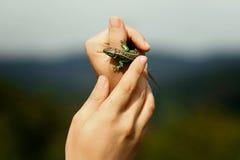Εκμετάλλευση ατόμων στη ζωηρόχρωμη πράσινη σαύρα χεριών στο υπόβαθρο του ξύλου Στοκ Φωτογραφία