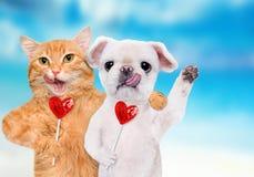Εκμετάλλευση γατών και σκυλιών στο γλυκό νόστιμο lollipop ποδιών με μορφή της καρδιάς Στοκ φωτογραφία με δικαίωμα ελεύθερης χρήσης