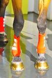 Εκπαίδευση αλόγου σε περιστροφές αλόγων Στοκ φωτογραφία με δικαίωμα ελεύθερης χρήσης