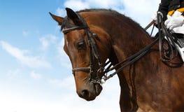 εκπαίδευση αλόγου σε περιστροφές Στοκ φωτογραφία με δικαίωμα ελεύθερης χρήσης