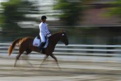 εκπαίδευση αλόγου σε περιστροφές Στοκ Εικόνα