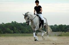 εκπαίδευση αλόγου σε π& Στοκ φωτογραφία με δικαίωμα ελεύθερης χρήσης