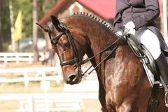 εκπαίδευση αλόγου σε π& Στοκ Φωτογραφίες