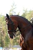 εκπαίδευση αλόγου σε π& Στοκ Εικόνες