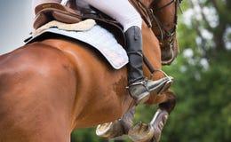 Εκπαίδευση αλόγου σε περιστροφές ιππασίας Στοκ φωτογραφία με δικαίωμα ελεύθερης χρήσης