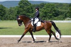 Εκπαίδευση αλόγου σε περιστροφές FEI Prix ST Georges Στοκ Εικόνα