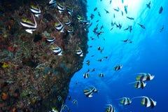 Εκπαίδευση Bannerfish Στοκ εικόνα με δικαίωμα ελεύθερης χρήσης
