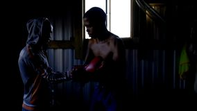 Εκπαιδευτής που βοηθά τον αρσενικό μπόξερ στη φθορά των εγκιβωτίζοντας γαντιών απόθεμα βίντεο