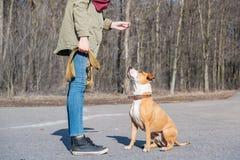 """Εκπαιδευτικός ένα ενήλικο σκυλί για να κάνει """"καθίστε """"την εντολή στοκ εικόνες"""