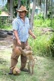 Εκπαιδευμένος πίθηκος, Ταϊλάνδη Στοκ Φωτογραφίες
