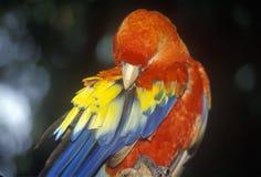 Εκπαιδευμένος παπαγάλος Macaw στους βυθισμένους κήπους, Αγία Πετρούπολη, ΛΦ στοκ φωτογραφίες
