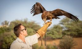 Εκπαιδευτής αετών Στοκ Εικόνες