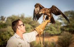 Εκπαιδευτής αετών Στοκ Φωτογραφίες