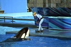 Εκπαιδευτής Seaworld που ταΐζει μια φάλαινα δολοφόνων Στοκ φωτογραφίες με δικαίωμα ελεύθερης χρήσης