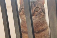 Εκπληκτικό βλέμμα μιας γάτας στοκ εικόνες