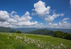 Εκτάσεις λιβαδιών με τα asphodels και τα λουλούδια ναρκίσσων κάτω από έναν μπλε ουρανό με τα σύννεφα Στοκ Εικόνες