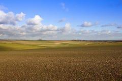 Εκτενές τοπίο καλλιέργειας Στοκ Εικόνα