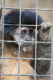 Εκτός από τον πίθηκο Στοκ Φωτογραφίες