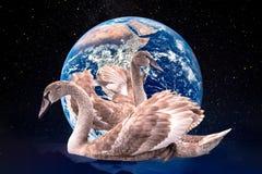 Εκτός από τον πλανήτη, εννοιολογικό κολάζ Ζώα από το κόκκινο IUCN στοκ φωτογραφία με δικαίωμα ελεύθερης χρήσης