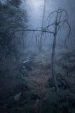 Εκφοβίζοντας ομιχλώδες δάσος Στοκ Εικόνες
