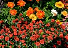 εκφράστε τη μακρο ευχαρίστηση αγάπης ζωής gerbers gerbera λουλουδιών λουλουδιών ηλιακή Στοκ φωτογραφία με δικαίωμα ελεύθερης χρήσης