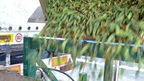 Εκφόρτωση των εμπορευματοκιβωτίων με τα φρέσκα αγγούρια φιλμ μικρού μήκους