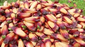 Εκχύλισμα φρούτων πεύκων φιλμ μικρού μήκους