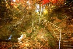 Εκλεκτής ποιότητας δάσος Στοκ εικόνες με δικαίωμα ελεύθερης χρήσης