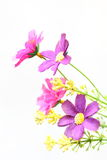 Εκλεκτής ποιότητας έγγραφο λουλουδιών Στοκ εικόνα με δικαίωμα ελεύθερης χρήσης