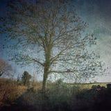 Εκλεκτής ποιότητας δέντρο Στοκ φωτογραφίες με δικαίωμα ελεύθερης χρήσης
