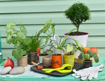 Εκλεκτής ποιότητας ακόμα ζωή με myrtle το δέντρο, το syngonium και άλλα houseplants στο πράσινο σύγχρονο κλίμα Στοκ Φωτογραφία