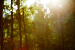 Εκλεκτής ποιότητας αναδρομικό θολωμένο δασικό τοπίο με τις διαρροές και bokeh στοκ φωτογραφία