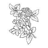 Εκλεκτής ποιότητας ανθοδέσμη ή σχέδιο λουλουδιών περιλήψεων Στοκ φωτογραφία με δικαίωμα ελεύθερης χρήσης