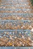 Εκλεκτής ποιότητας βήματα πετρών που καλύπτονται με τα πεσμένα φύλλα Στοκ Εικόνα