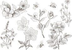 Εκλεκτής ποιότητας βοτανικά λουλούδια ανθών απεικόνισης καθορισμένα Στοκ φωτογραφία με δικαίωμα ελεύθερης χρήσης
