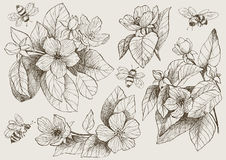 Εκλεκτής ποιότητας βοτανικά λουλούδια ανθών απεικόνισης με τις μέλισσες Στοκ Φωτογραφίες