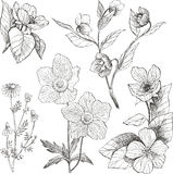 Εκλεκτής ποιότητας βοτανικά λουλούδια απεικόνισης καθορισμένα Στοκ Εικόνες