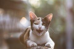 Εκλεκτής ποιότητας γάτα Στοκ φωτογραφία με δικαίωμα ελεύθερης χρήσης