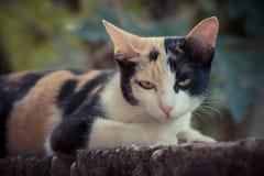 Εκλεκτής ποιότητας γάτα Στοκ Εικόνες