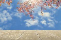 Εκλεκτής ποιότητας γκρίζο tabletop στα θολωμένα ρόδινα λουλούδια ανθών κερασιών και το θολωμένο υπόβαθρο μπλε ουρανού Στοκ εικόνα με δικαίωμα ελεύθερης χρήσης