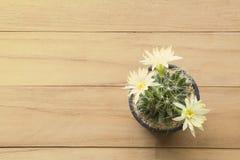 Εκλεκτής ποιότητας εικόνα του κίτρινου λουλουδιού κάκτων σε ξύλινο Στοκ φωτογραφία με δικαίωμα ελεύθερης χρήσης