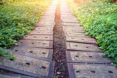 εκλεκτής ποιότητας διάβαση πεζών ύφους φωτογραφιών πάρκων εικόνας Στοκ Φωτογραφίες