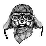 Εκλεκτής ποιότητας διανυσματικές εικόνες των σκυλιών για το σχέδιο μπλουζών για τη μοτοσικλέτα, ποδήλατο, μοτοσικλέτα, λέσχη μηχα Στοκ Φωτογραφίες