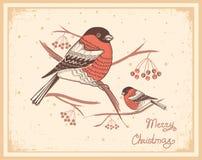 Εκλεκτής ποιότητας κάρτα Χριστουγέννων με τα bullfinches και το χιόνι απεικόνιση αποθεμάτων