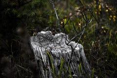 Εκλεκτής ποιότητας κολόβωμα Στοκ φωτογραφία με δικαίωμα ελεύθερης χρήσης