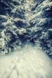 Εκλεκτής ποιότητας μονοπάτι στο αποκλεισμένο από τα χιόνια δάσος Στοκ Εικόνα