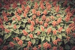 Εκλεκτής ποιότητας λουλούδια στον κήπο Στοκ Φωτογραφίες
