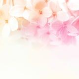 Εκλεκτής ποιότητας λουλούδια χρώματος στο μαλακό και ύφος θαμπάδων στη σύσταση εγγράφου μουριών Στοκ φωτογραφίες με δικαίωμα ελεύθερης χρήσης